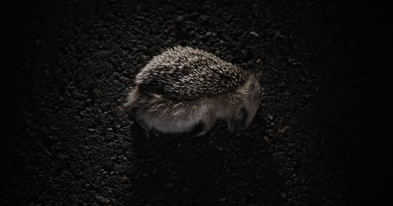 Nocna zwierzyna